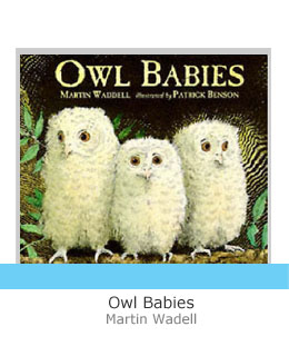 Owl babies with grey